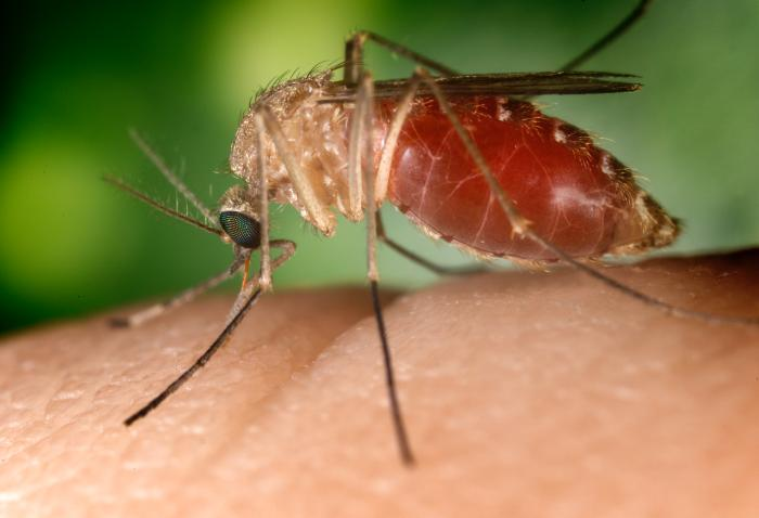West Nile Virus signs, symptoms and prevention tips
