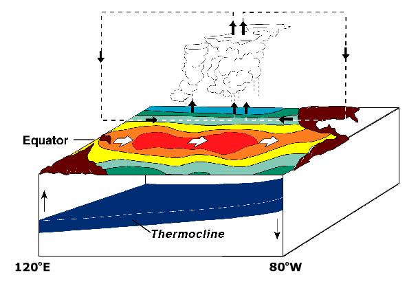Via Wikipedia: Condiciones de El Niño. El pool de agua caliente va hacia la costa sudamericana. Ausencia de movimientos de agua fría incrementan el calentamiento