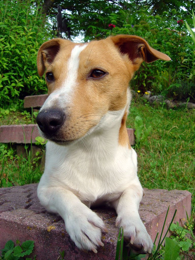 %name Pitbull Dog Personality