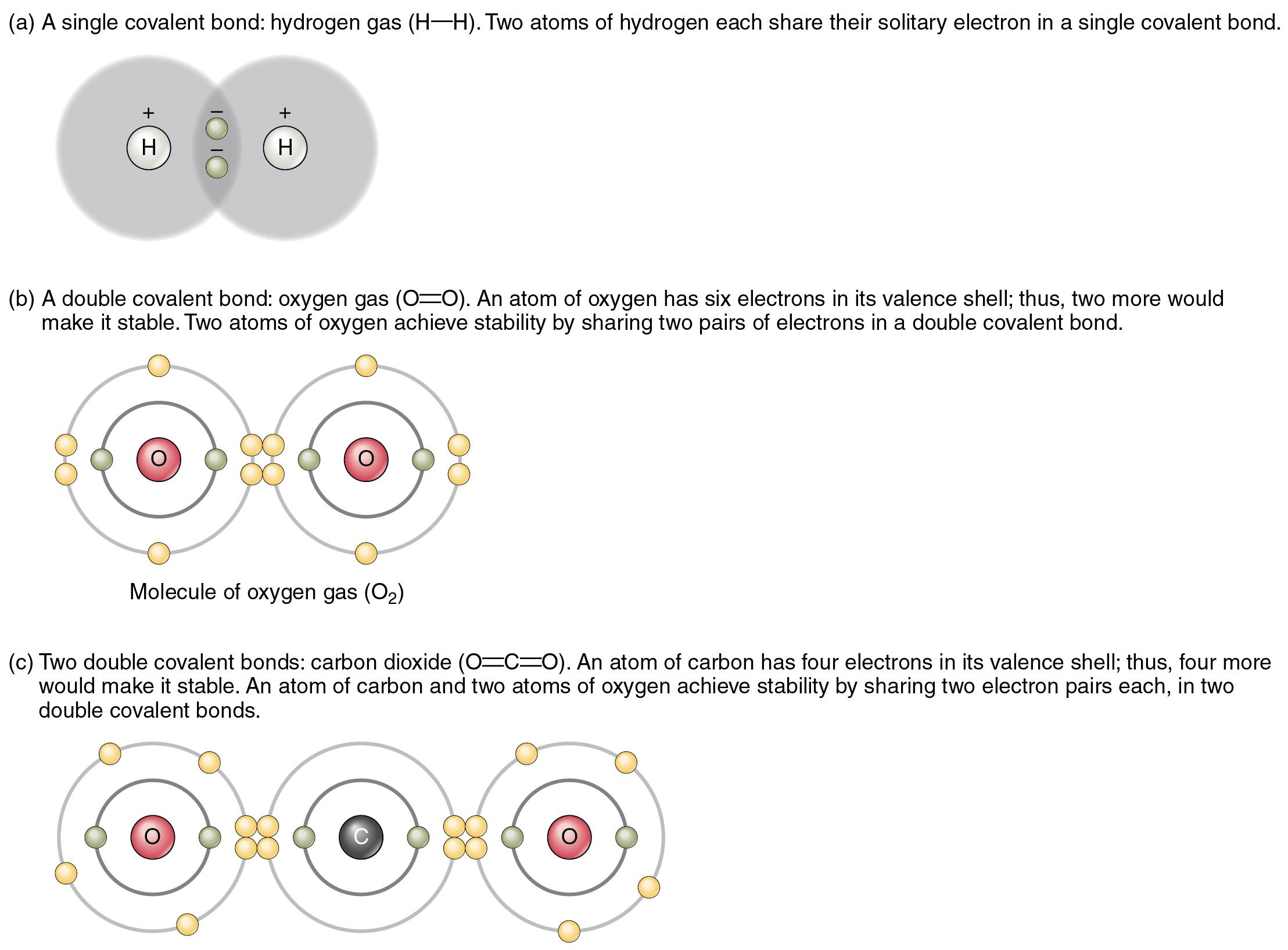 File 208 Covalent Bonding 01
