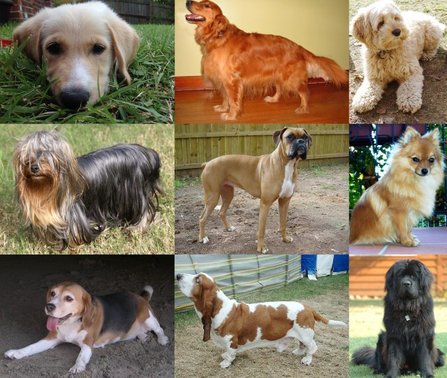 Collage Of Nine Dogs Jpg