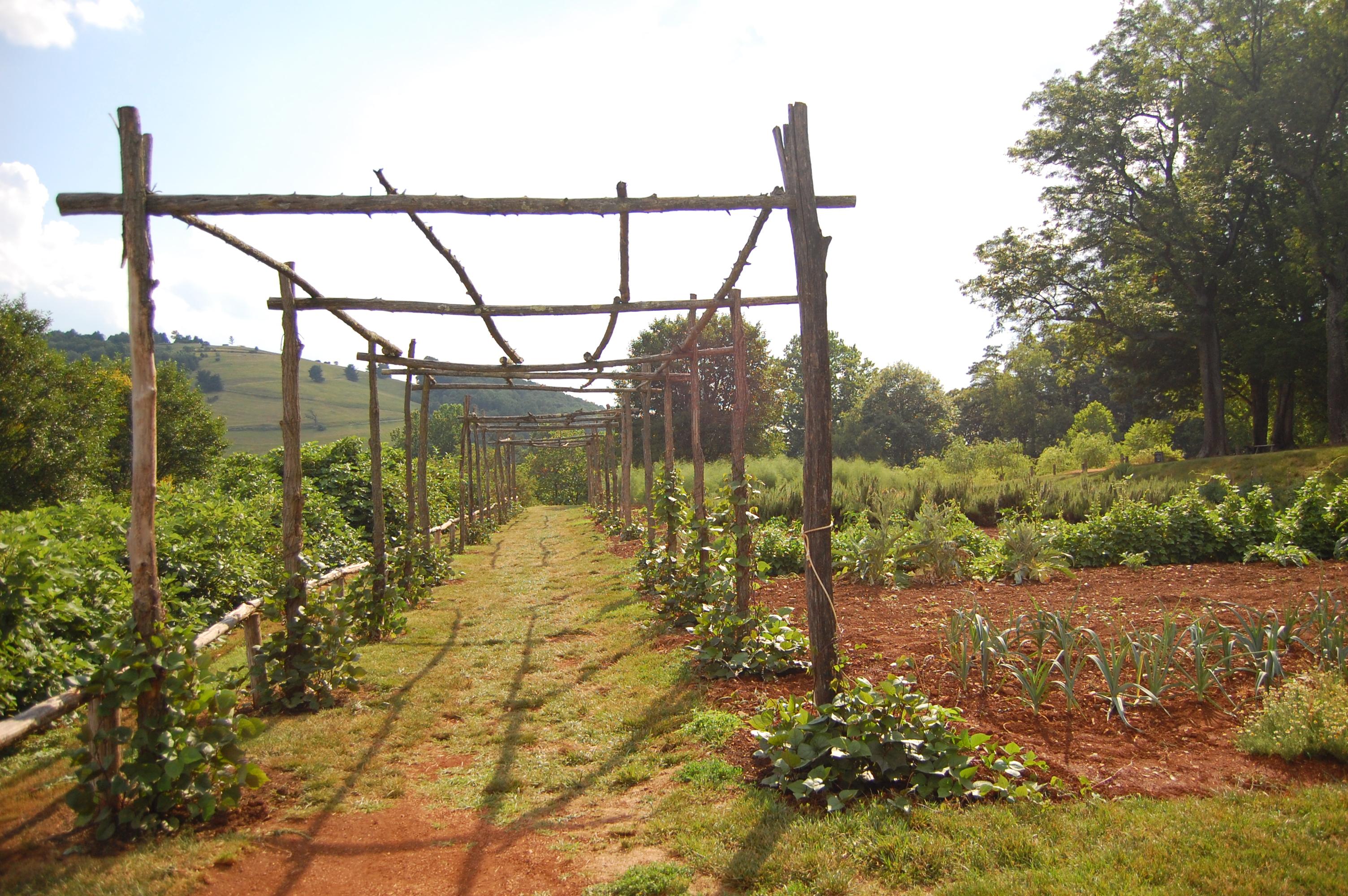 pergola bois pour plantes grimpantes