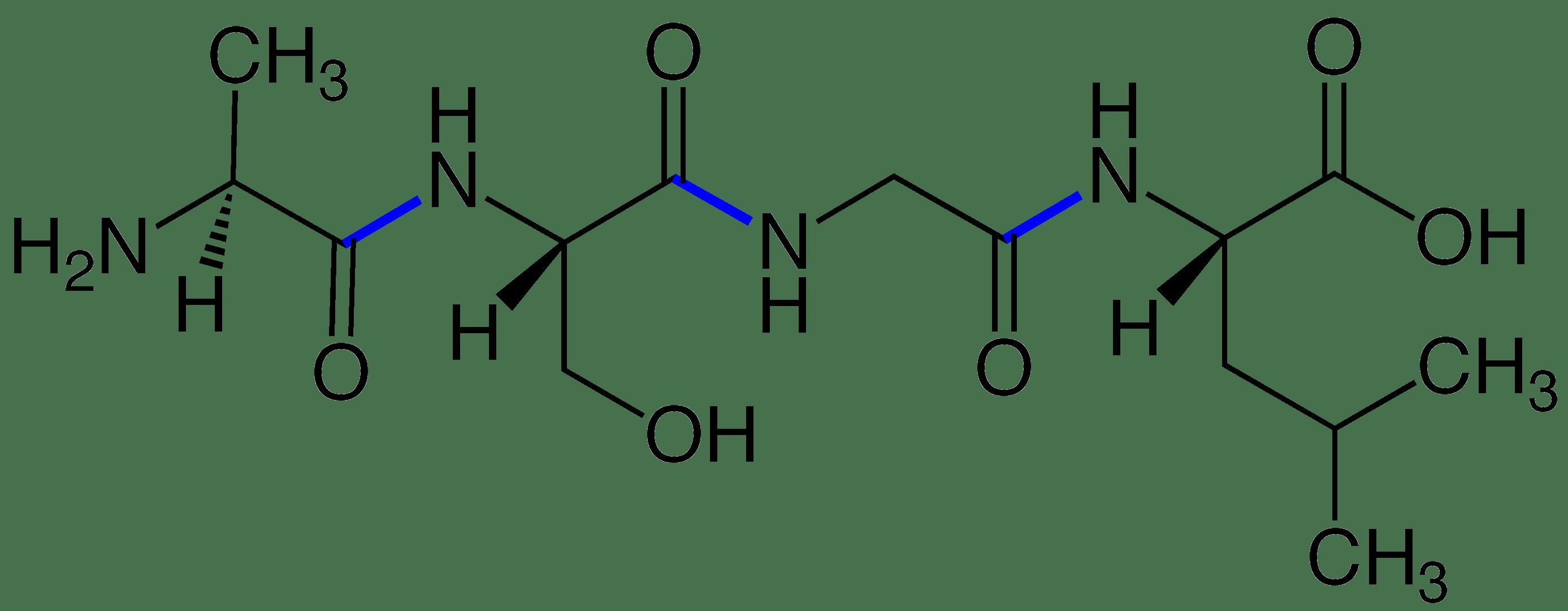 File Peptide Bonds Tet Ptide V 1
