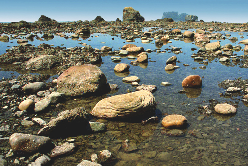 the species in the tide pool in washington states Please do not take home shells or animals they are all integral components of  the  rosario head at deception pass state park offers an ideal tide pool hike  for.