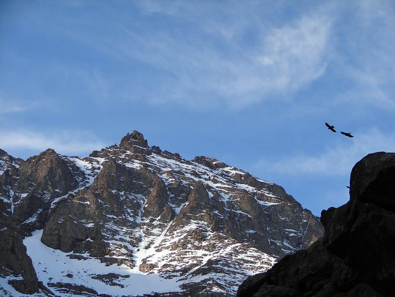 File:Birds and toubkal.jpg