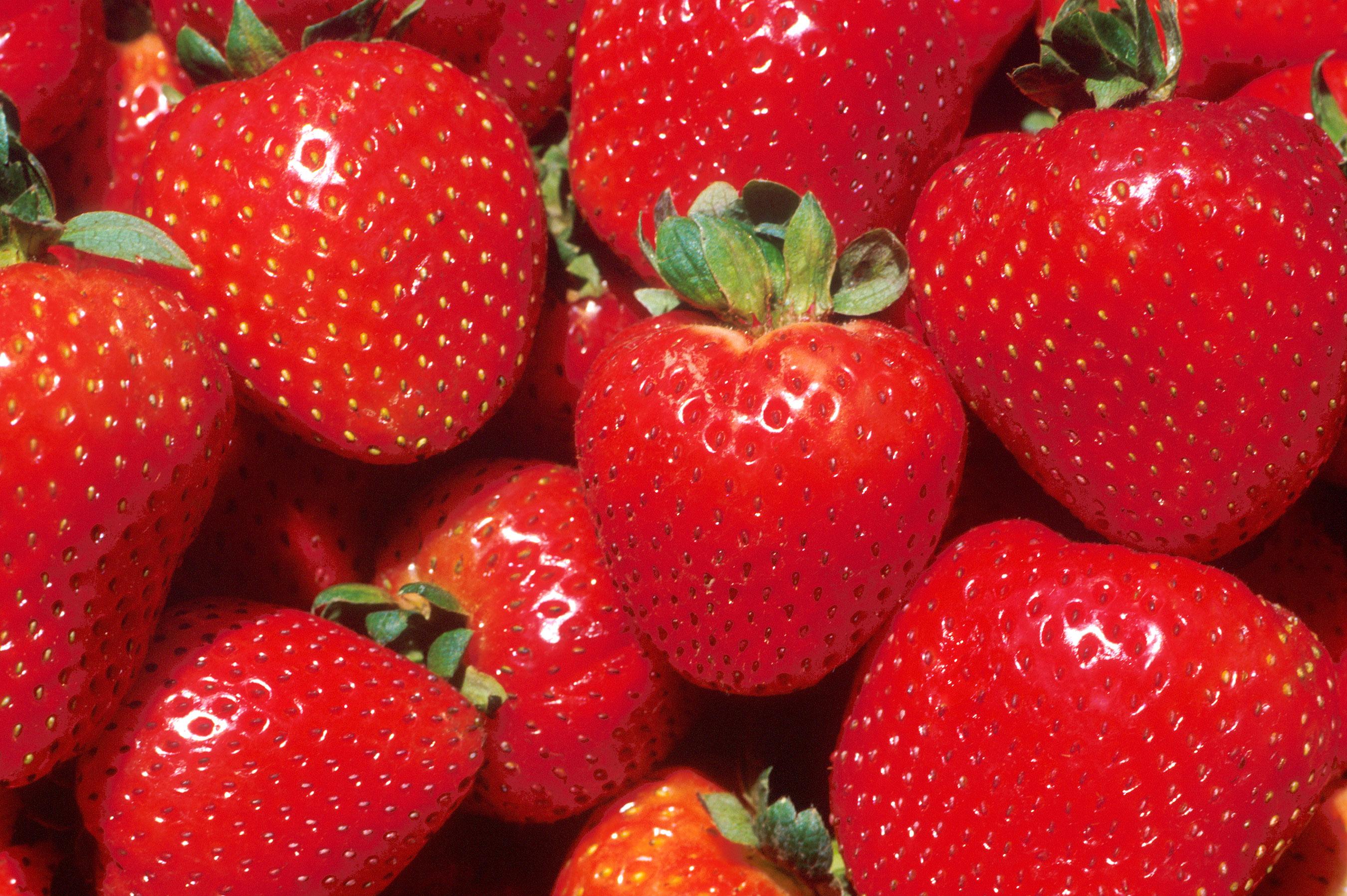 File Strawberries Jpg Wikipedia