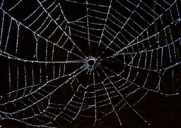 File:Web kruisspin.jpg