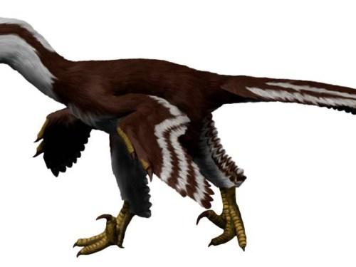 https://i1.wp.com/upload.wikimedia.org/wikipedia/commons/e/ec/Acheroraptor_NT_small.jpg?resize=500%2C375&ssl=1