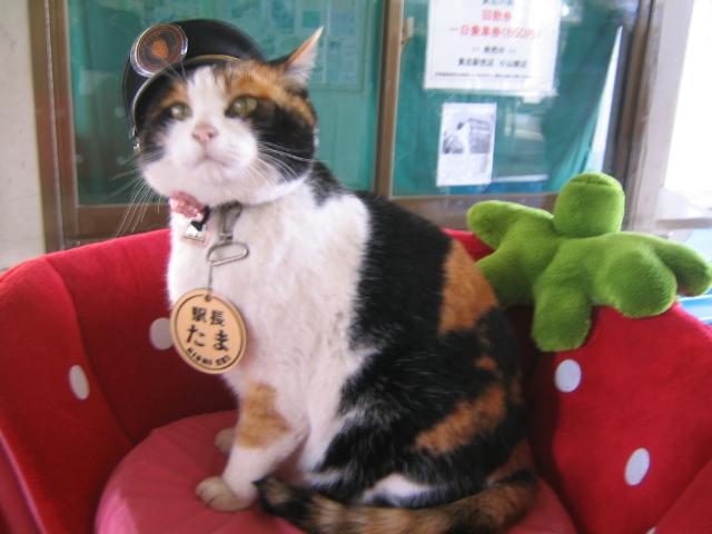 Ficheiro:Station-Master Tama.JPG