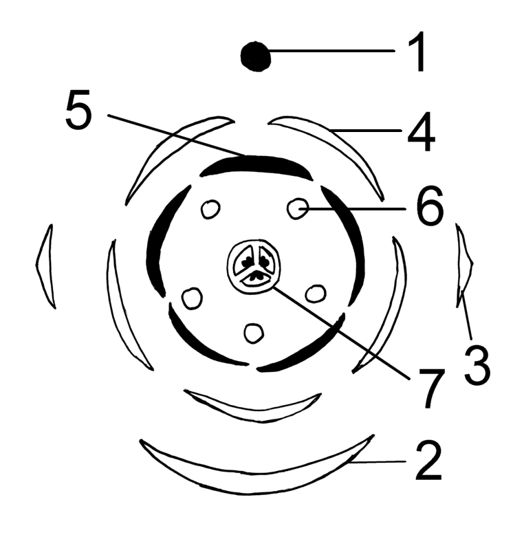 Diagram Diagram Of A Sunflower Parts Free Electrical Wiring Diagram