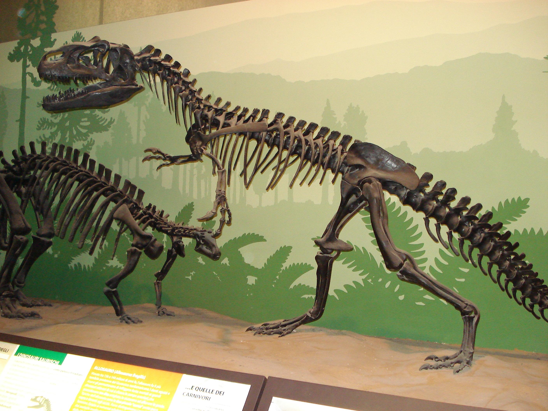 FileDSC01705 Scheletro Dinosauro Museo Di Storia