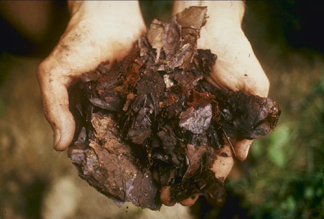 Plik:Compost.jpg