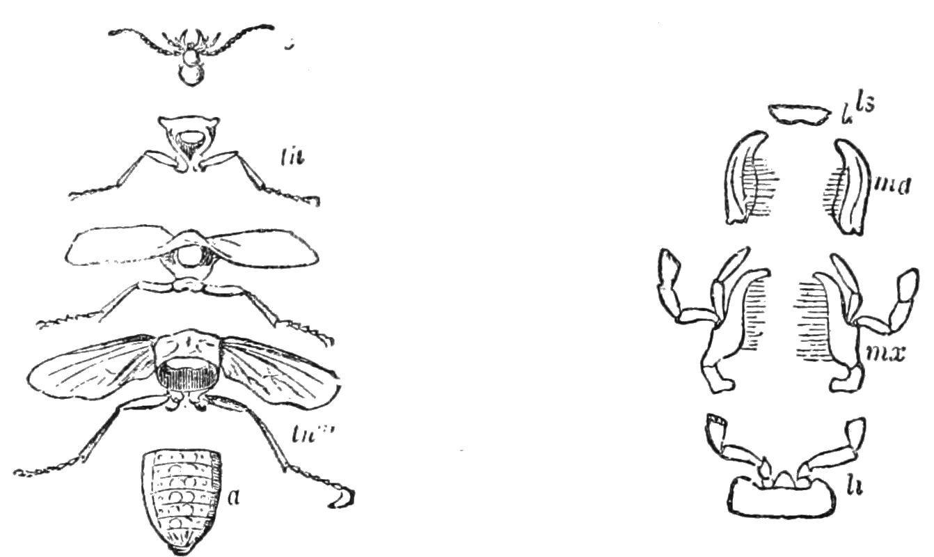 File Psm V39 D240 Insect Body Parts
