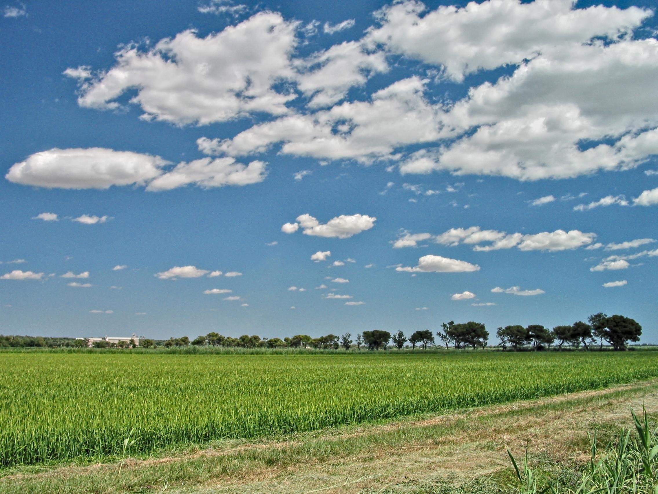 Ruộng lúa ở Camargue