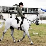 Equestrianism Wikipedia