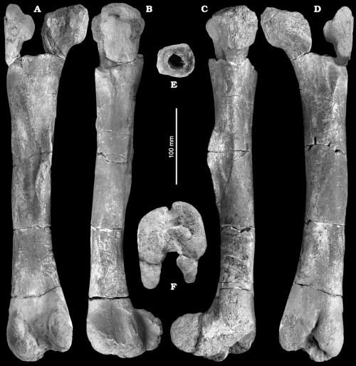 https://i1.wp.com/upload.wikimedia.org/wikipedia/commons/f/fb/Burianosaurus.jpg?resize=500%2C514&ssl=1
