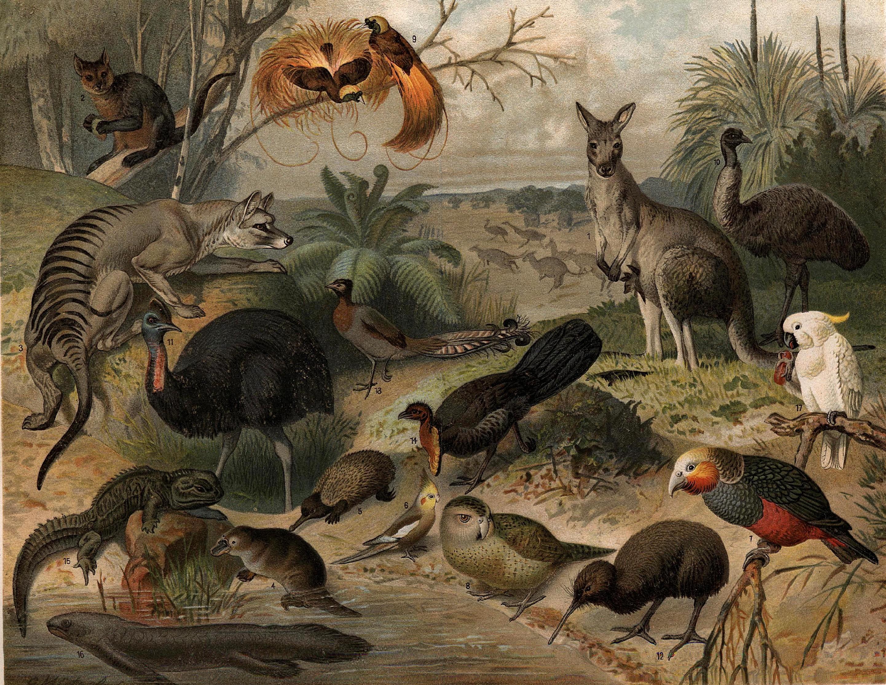 https://i1.wp.com/upload.wikimedia.org/wikipedia/commons/f/fc/Australisk_fauna,_Nordisk_familjebok.jpg