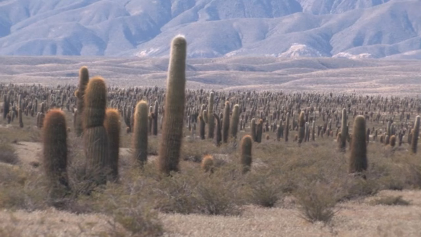 File Parque Nacional Los Cardones