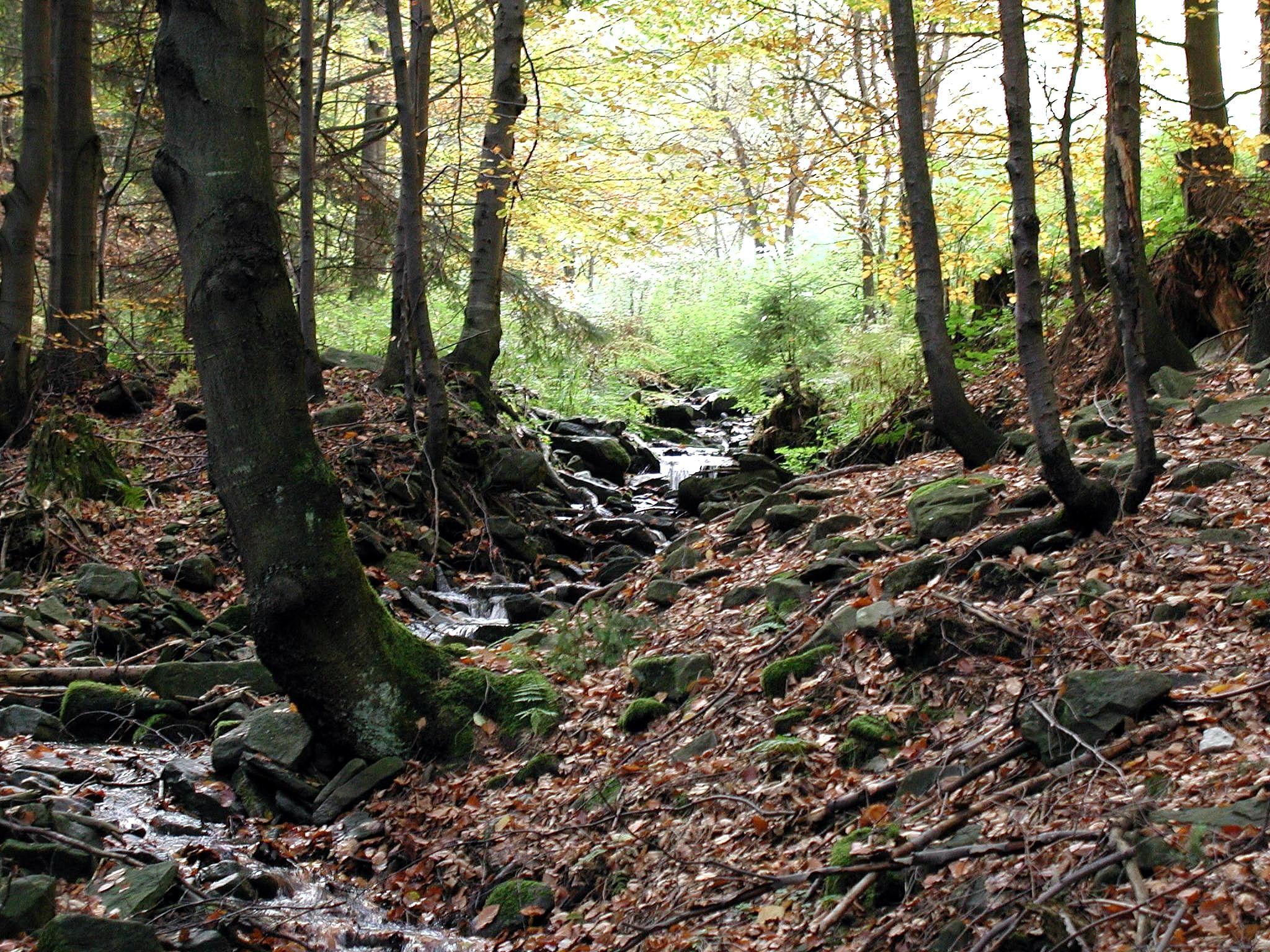 Cloud Forest Habitat Images