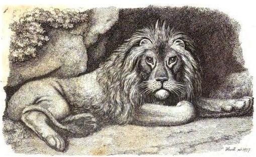 Howitt - Lion