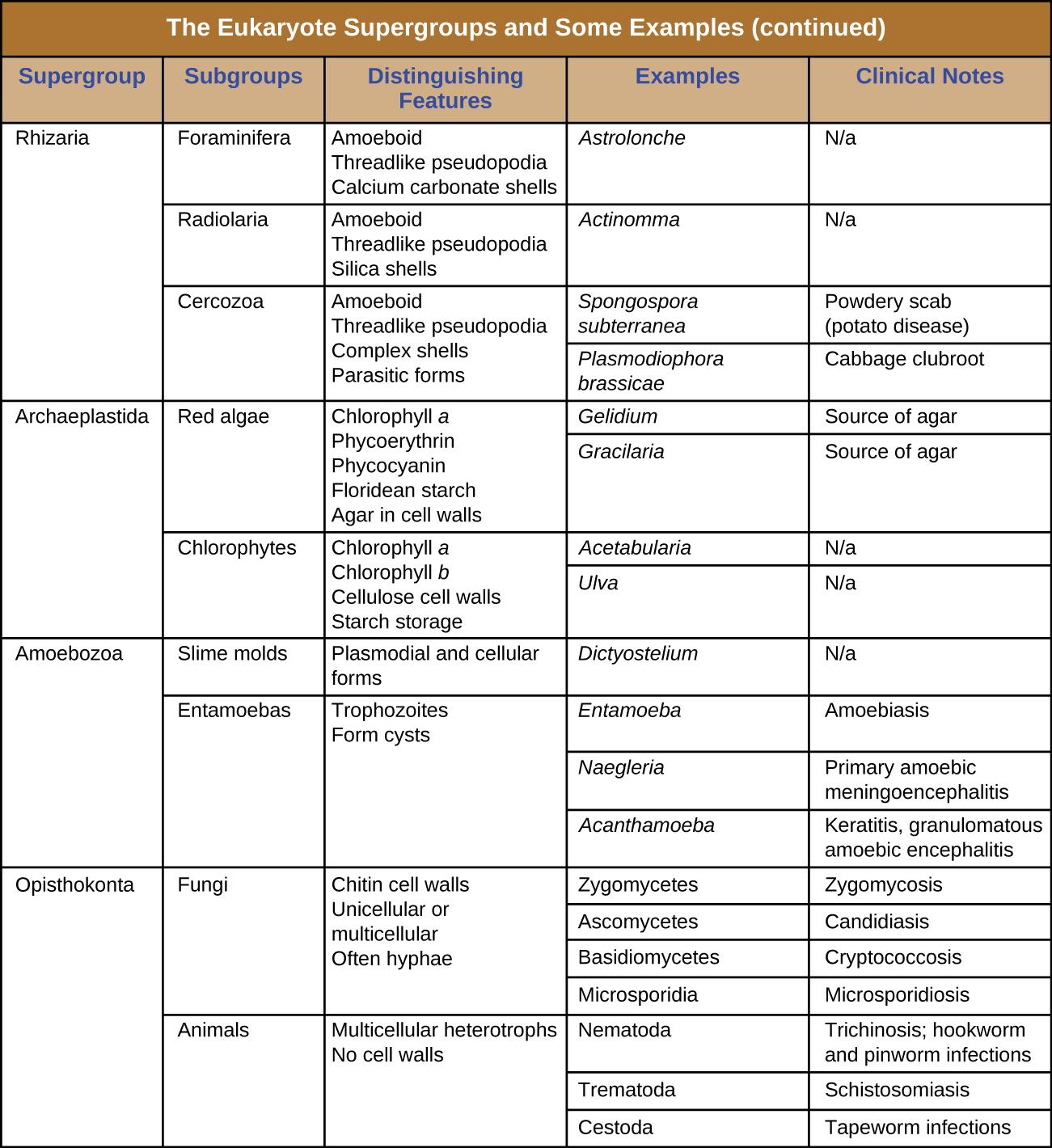 File Osc Microbio 05 01 Groups2