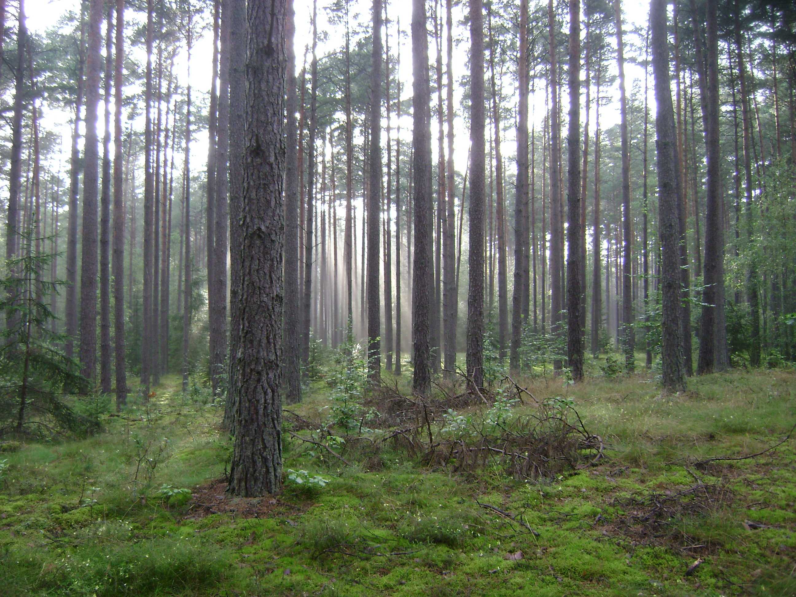 Forest in Gmina Jedwabno, Poland.