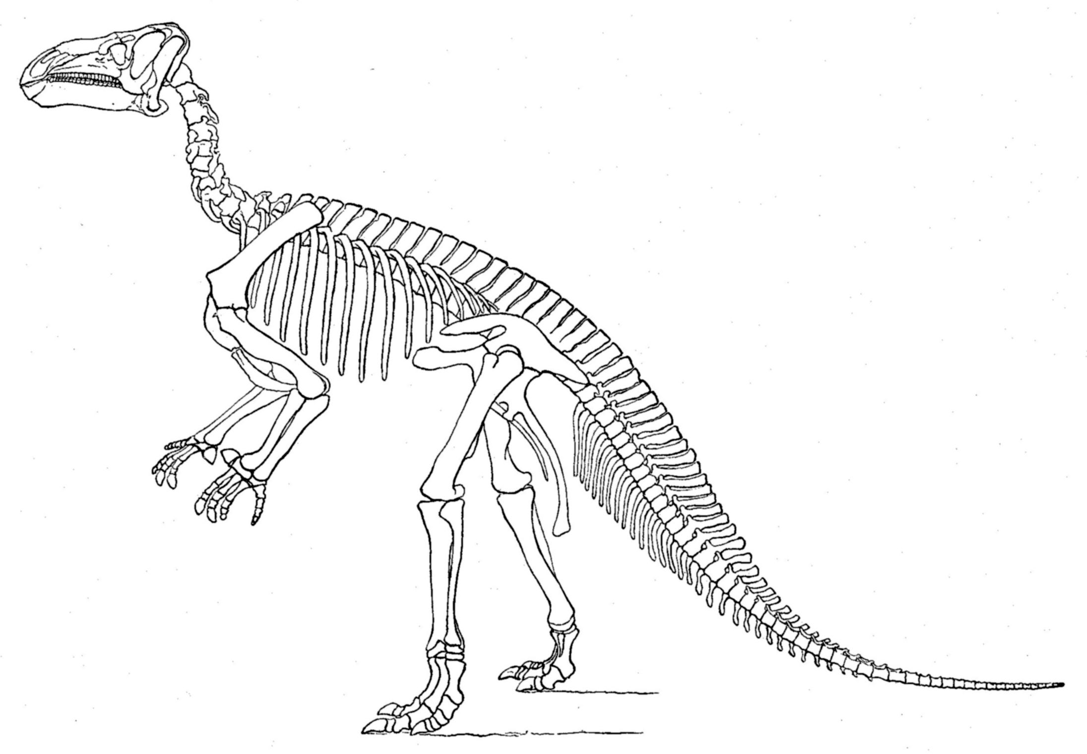File Marsh Iguanodon