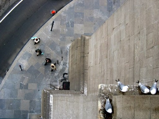 Kittiwakes on the Tyne Bridge - geograph.org.uk - 1133246