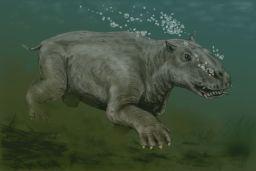 Paleoparadoxia, otro mamífero del Mioceno ya extinguido