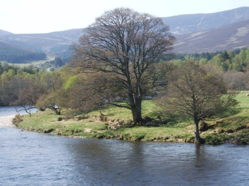 Tree by River Dee - geograph.org.uk - 792040