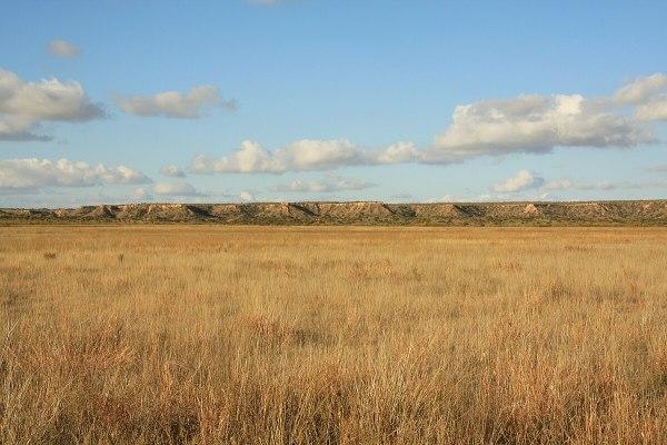 Shortgrass prairie - Wikipedia