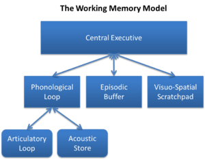 Image result for working model of memory