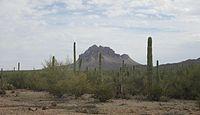 ラギッドトップアイアンウッドフォレスト国定公園アリゾナ州2014.jpg