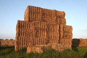 English: Haystack