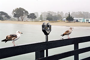 Parking meter at the pier in the vicinity of M...