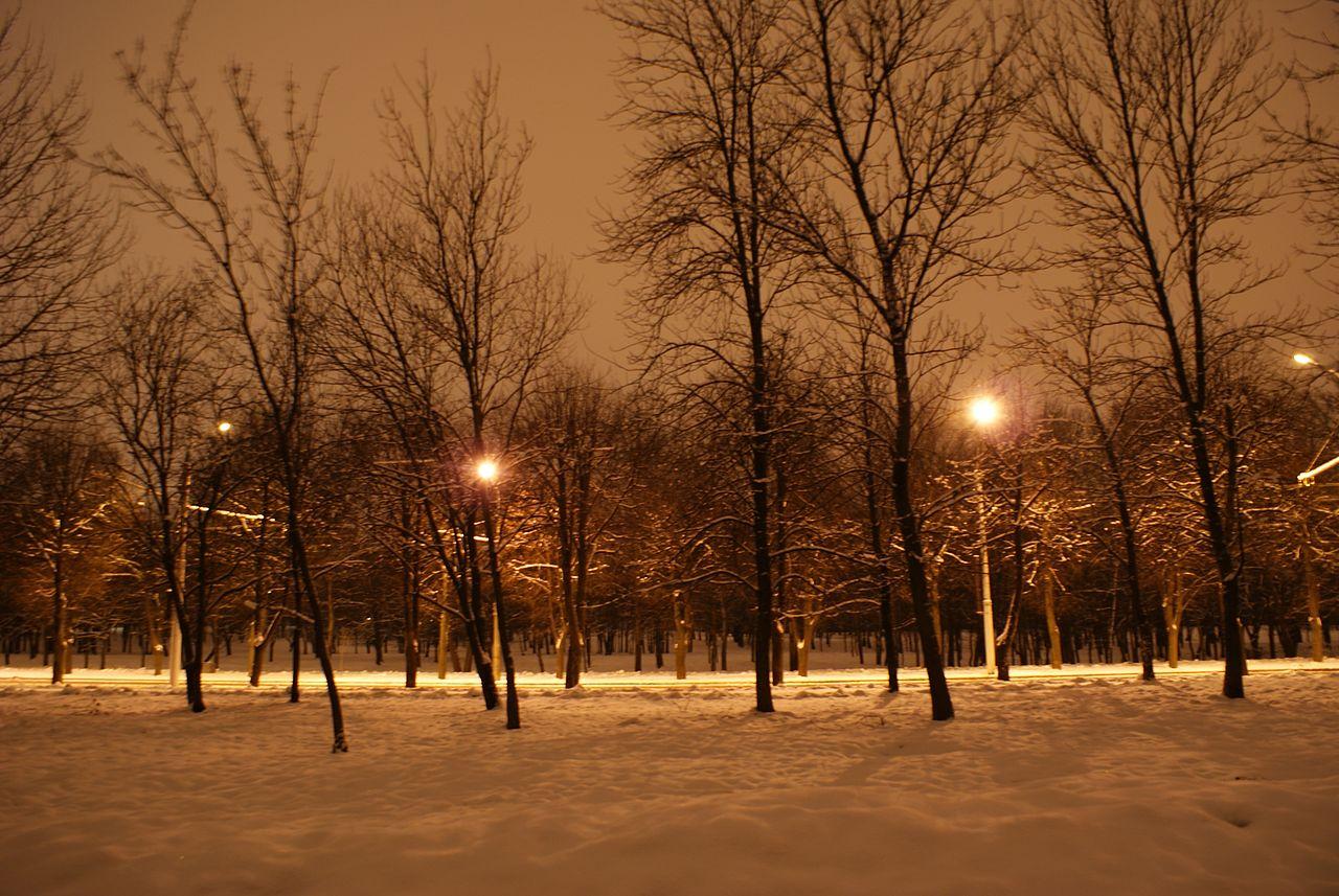 File Sevastopol Sky Park Winter Night