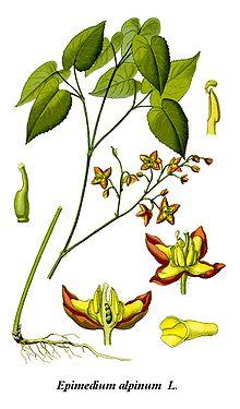Elfenblumen Wikipedia