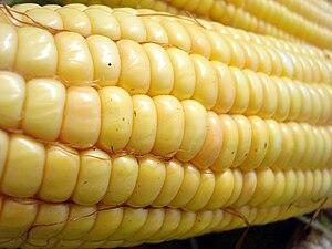 English: Corn