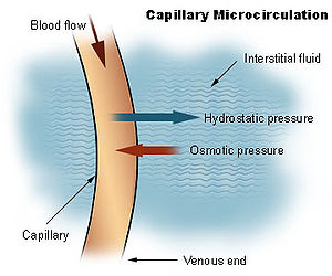 Formation of interstitial fluid from blood