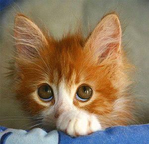 Coll little Orange Tabby kitten