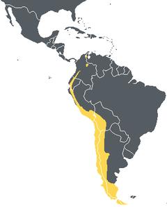 Peta persebaran Kondor Andes. Kuning menandai kehadiran.