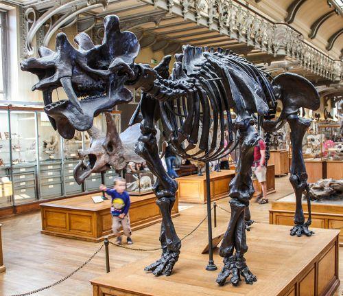Museum of Natural History Uintatherium.jpg