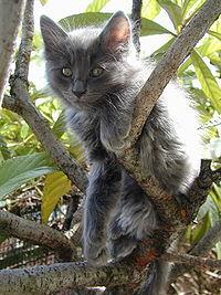 I gatti prediligono posti alti, come ad esempio alberi, che utilizzano anche come via di fuga da eventuali pericoli