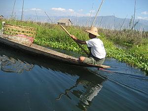 English: Beida (water hyacinth) at Inle Lake