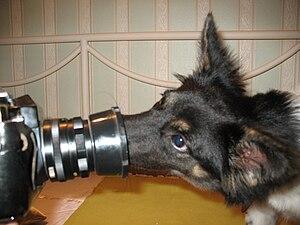 Divorce Dog Training Missoula Mt