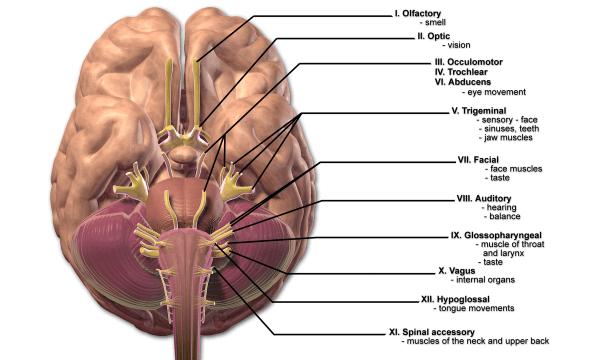 Neurosarcoidosis - Wikipedia