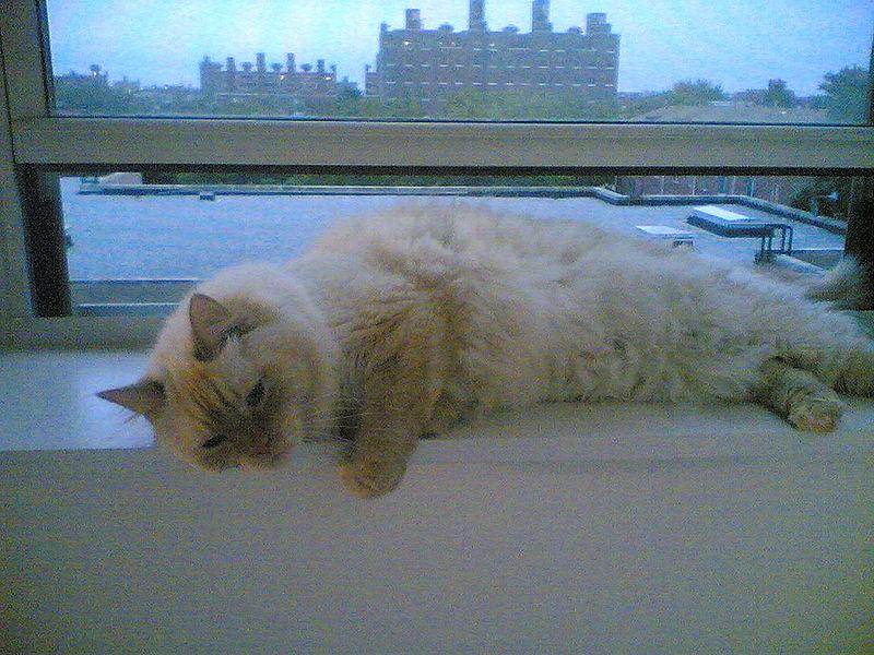 File:Katzen kentst.jpg