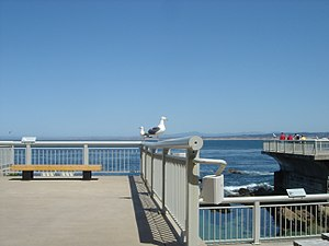 On the outside Deck of the Monterey Bay Aquari...