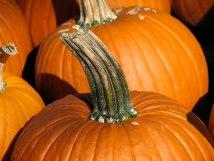 A shot of a pumpkin, focused on its stem.