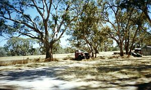 Rural Australia Abandoned habitat